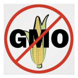 stop-genetically-modified-foods.jpg
